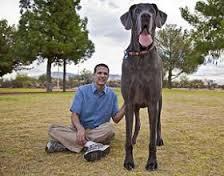 grootste-hond ter wereld