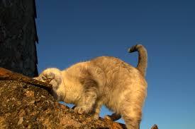 kat geeft kopjes