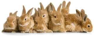 wat eten konijnen